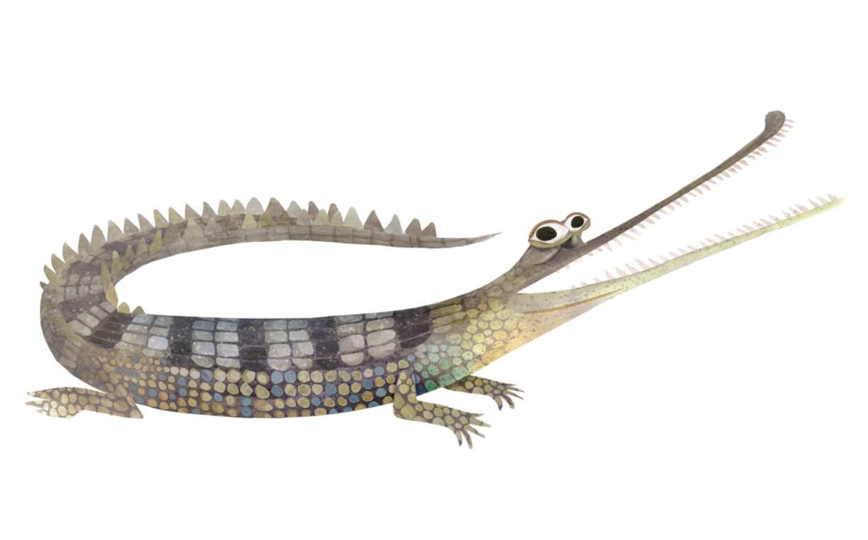 Animalia - Brendan Wenzel