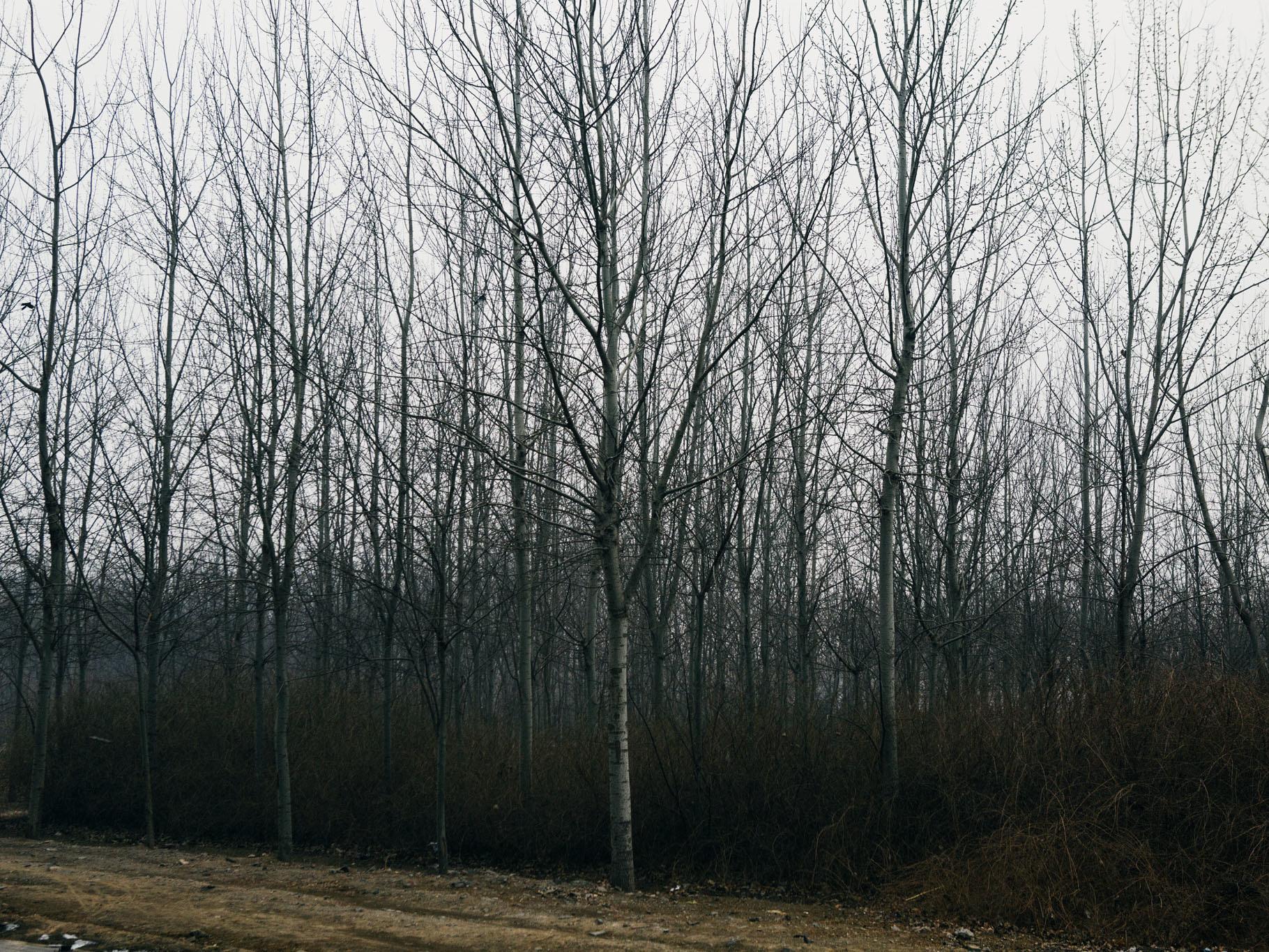 Beijing / João Canziani (6)