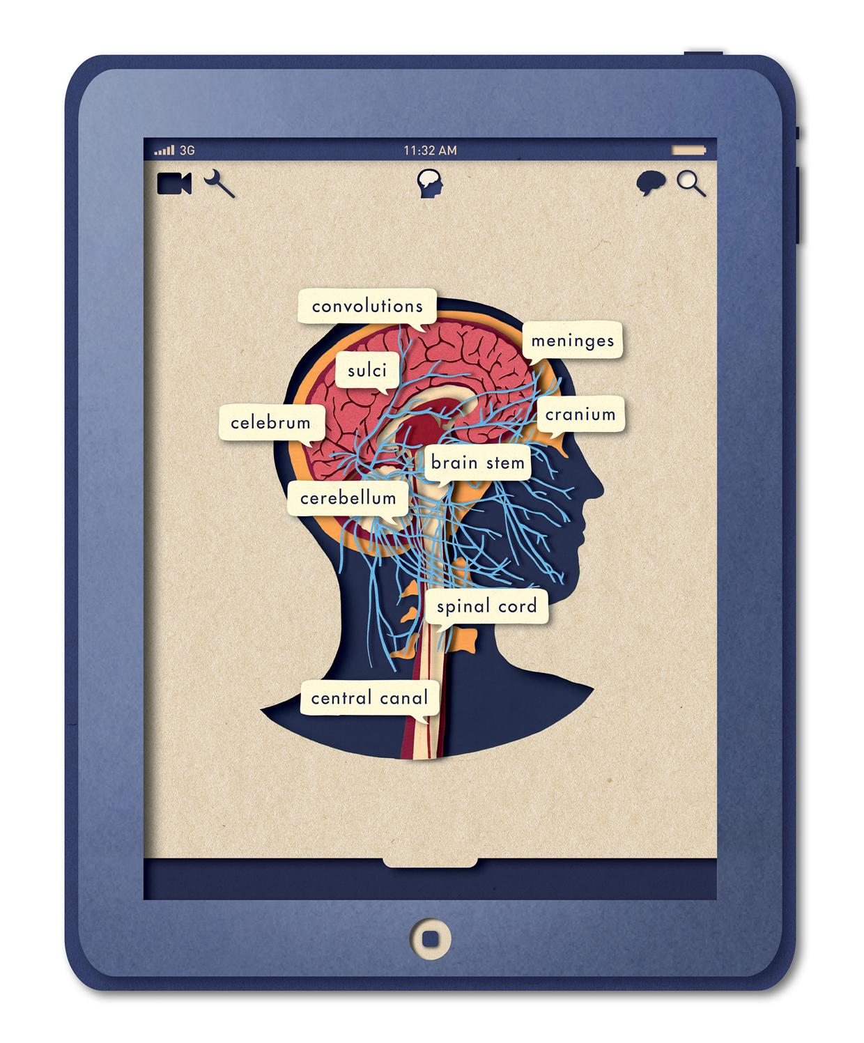 Biotud App - Nervous System / Varga Natalia (4)