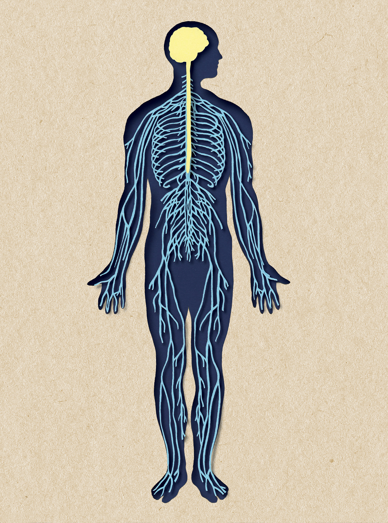 Biotud App - Nervous System / Varga Natalia (3)