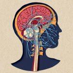 Biotud App – Nervous System / Varga Natalia