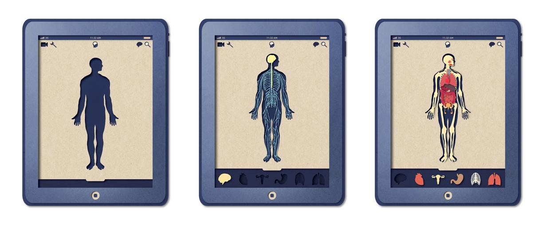 Biotud App - Nervous System / Varga Natalia (13)