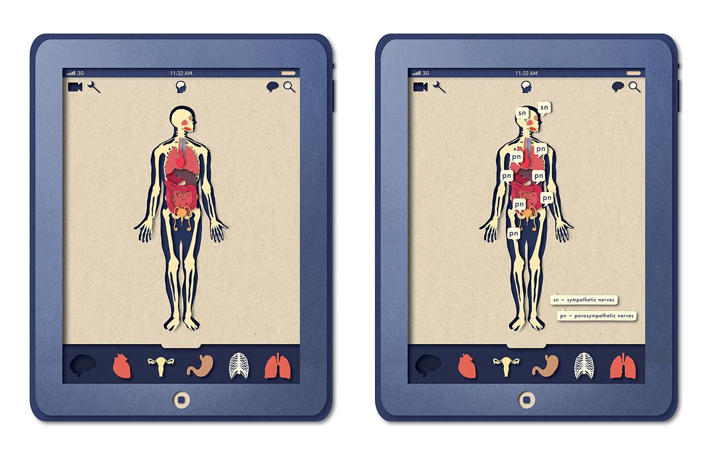 Biotud App - Nervous System / Varga Natalia (8)