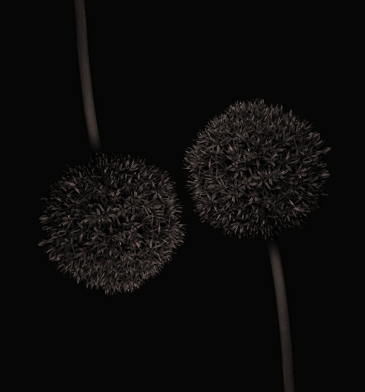 Dark Chocolate/ Bettina Güber (7)