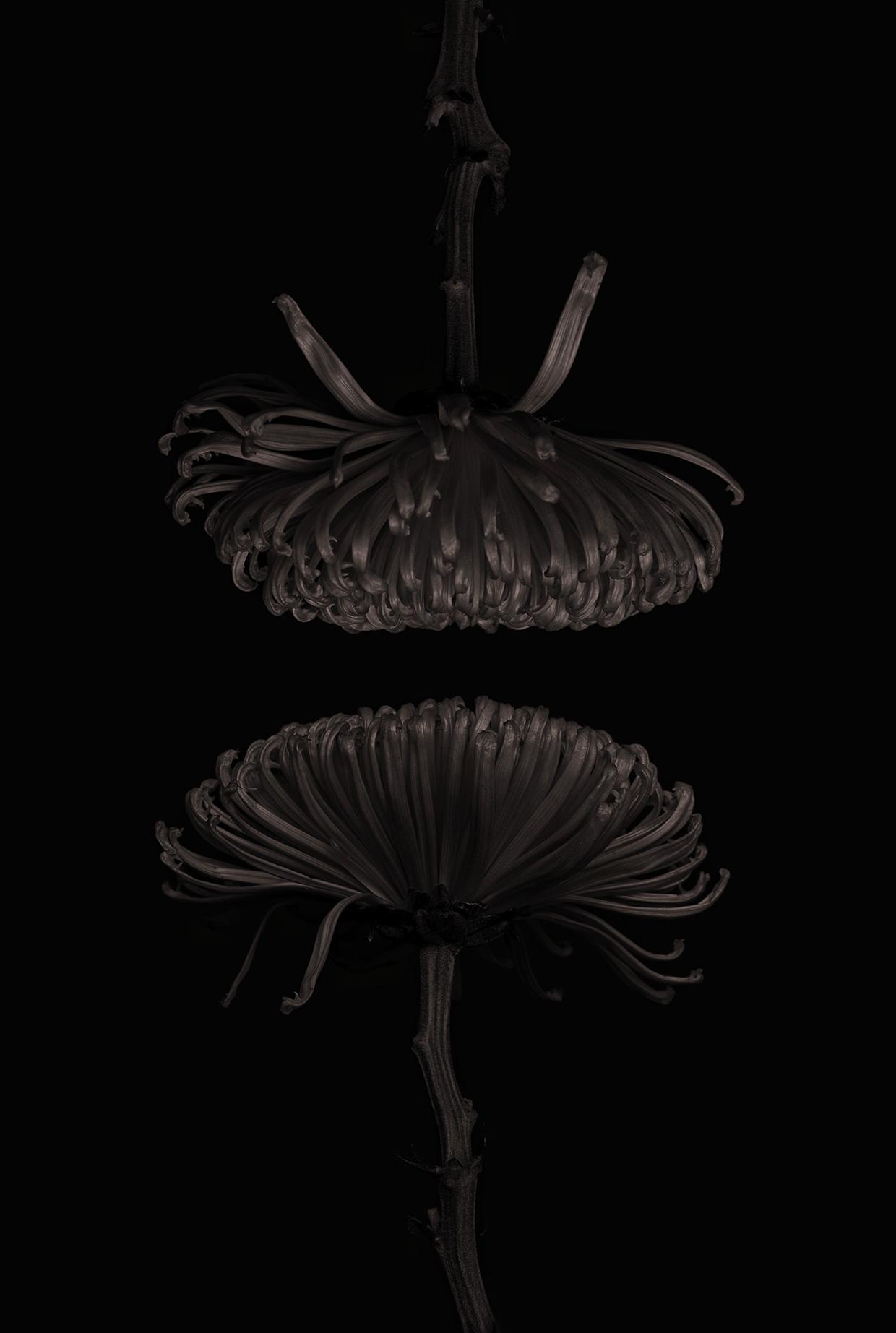 Dark Chocolate/ Bettina Güber (4)