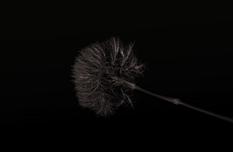 Dark Chocolate/ Bettina Güber (3)