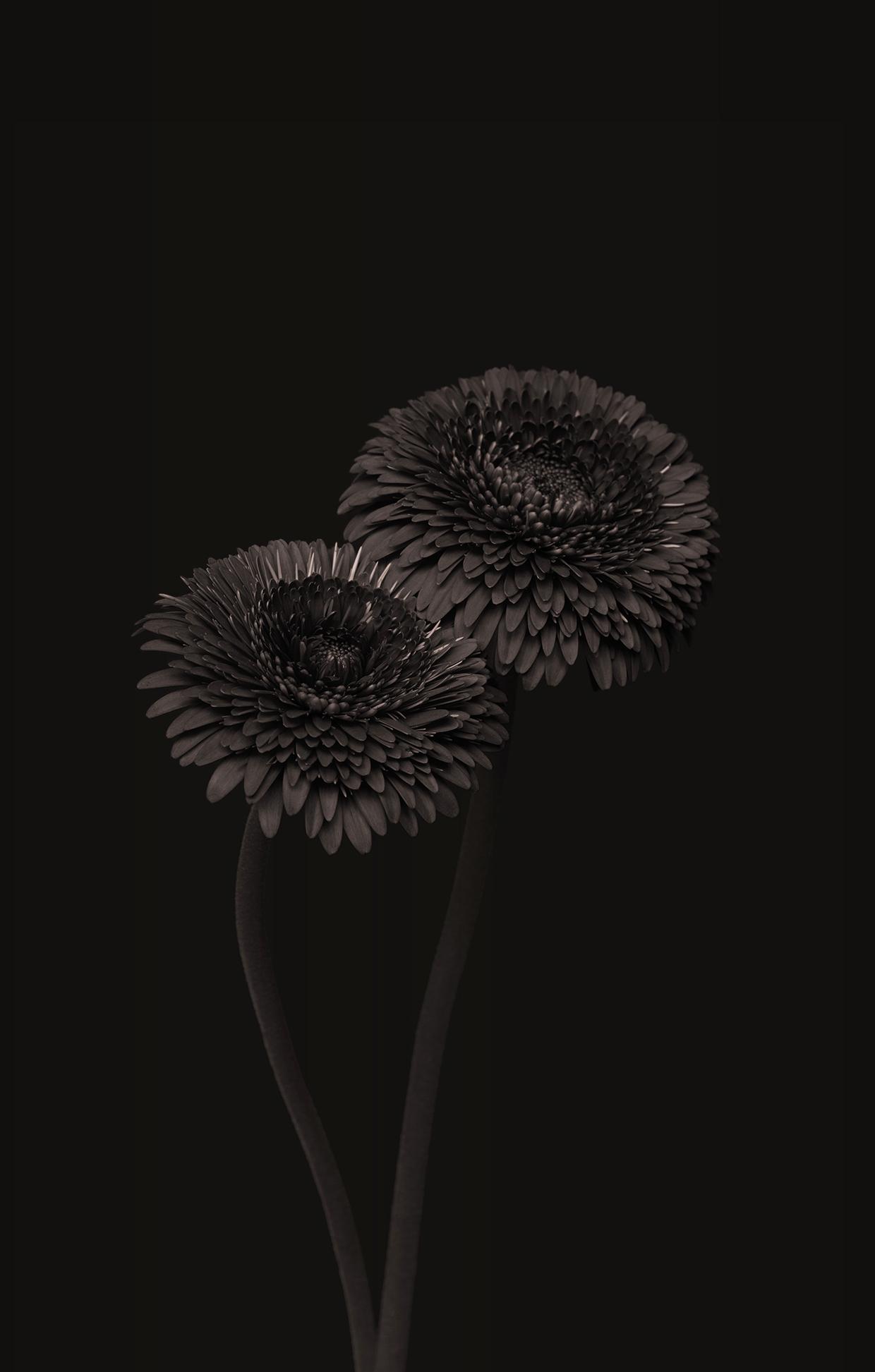 Dark Chocolate/ Bettina Güber (2)