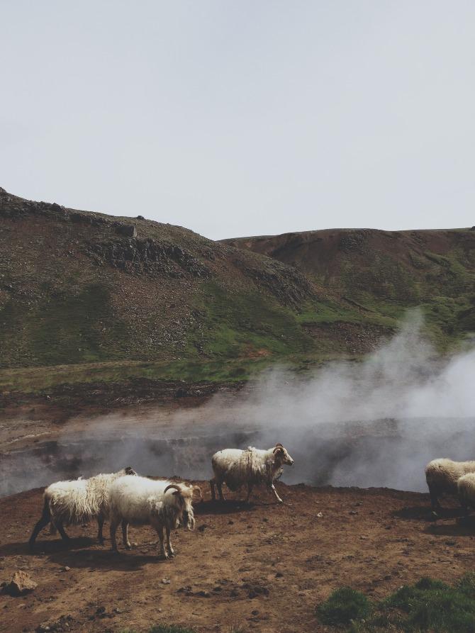 Iceland-Andrew_Gallo-17