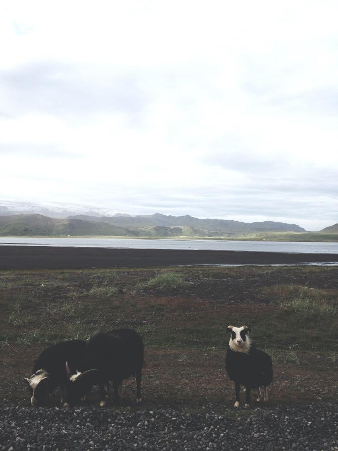 Iceland-Andrew_Gallo-8