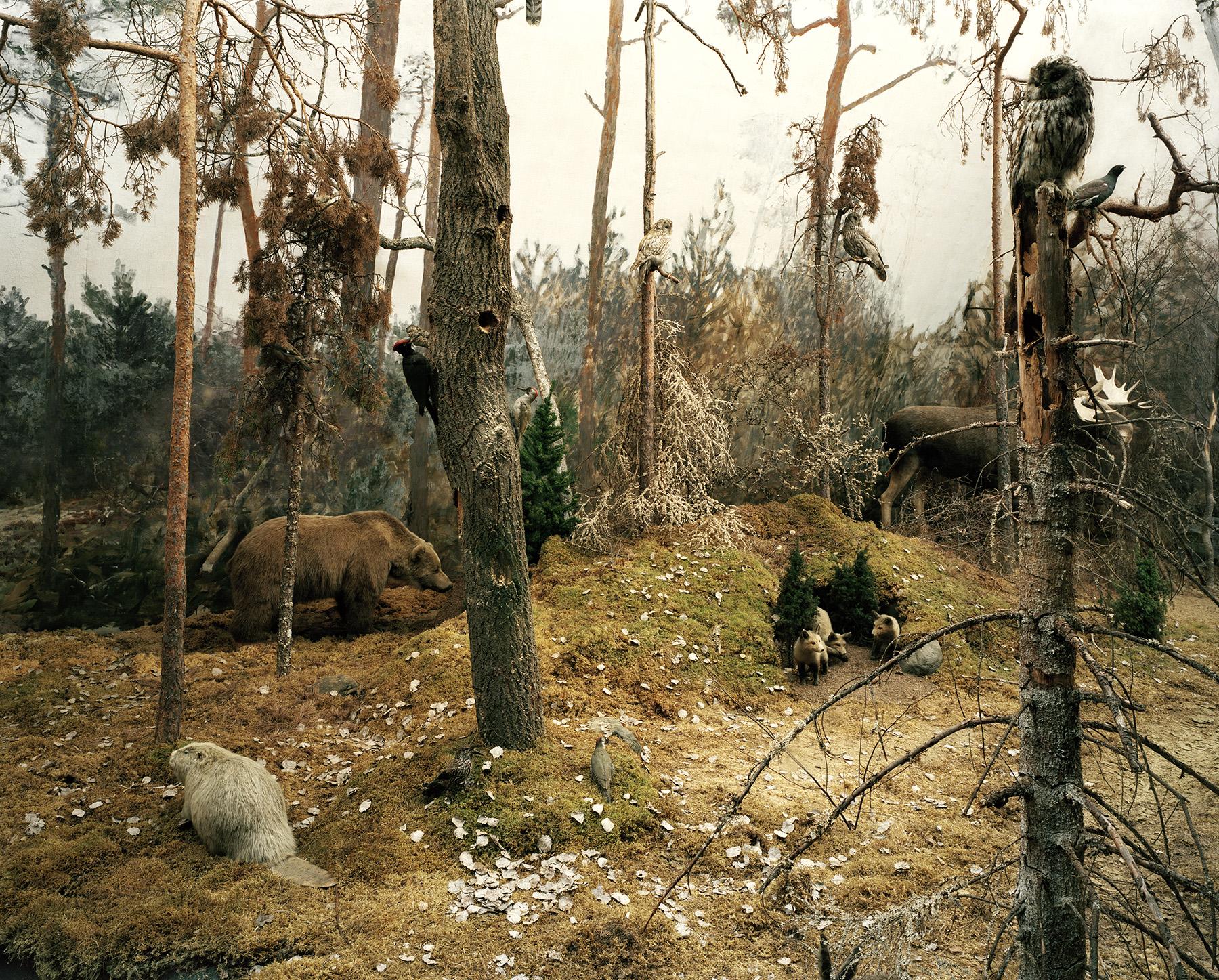 Landscape 5 / Felix Odell (12)