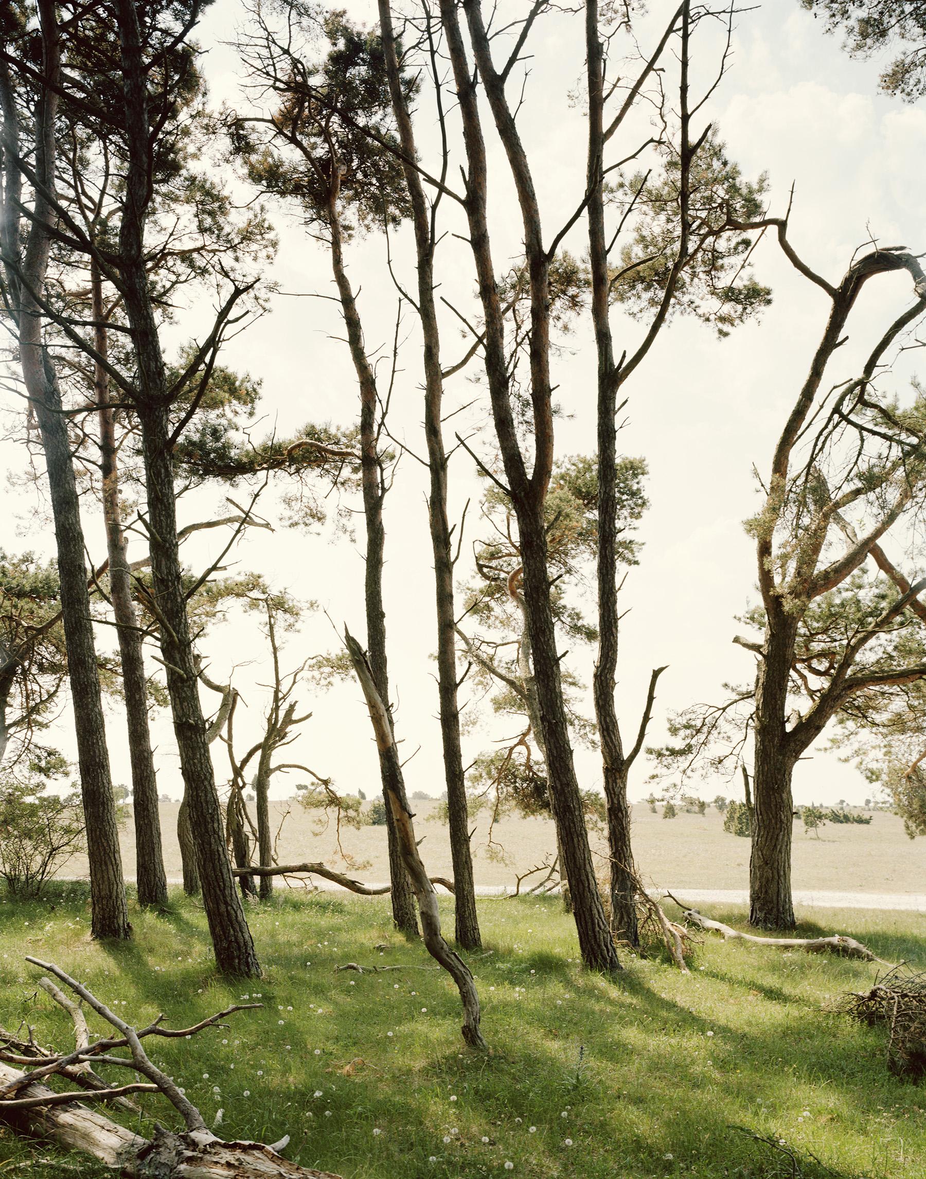 Landscape 5 / Felix Odell (14)