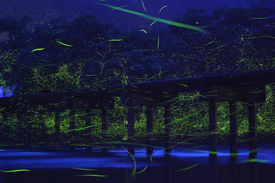 Natural Light in Japan / Takehito Miyatake (7)
