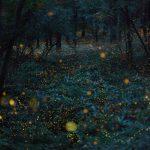 Natural Light in Japan / Takehito Miyatake