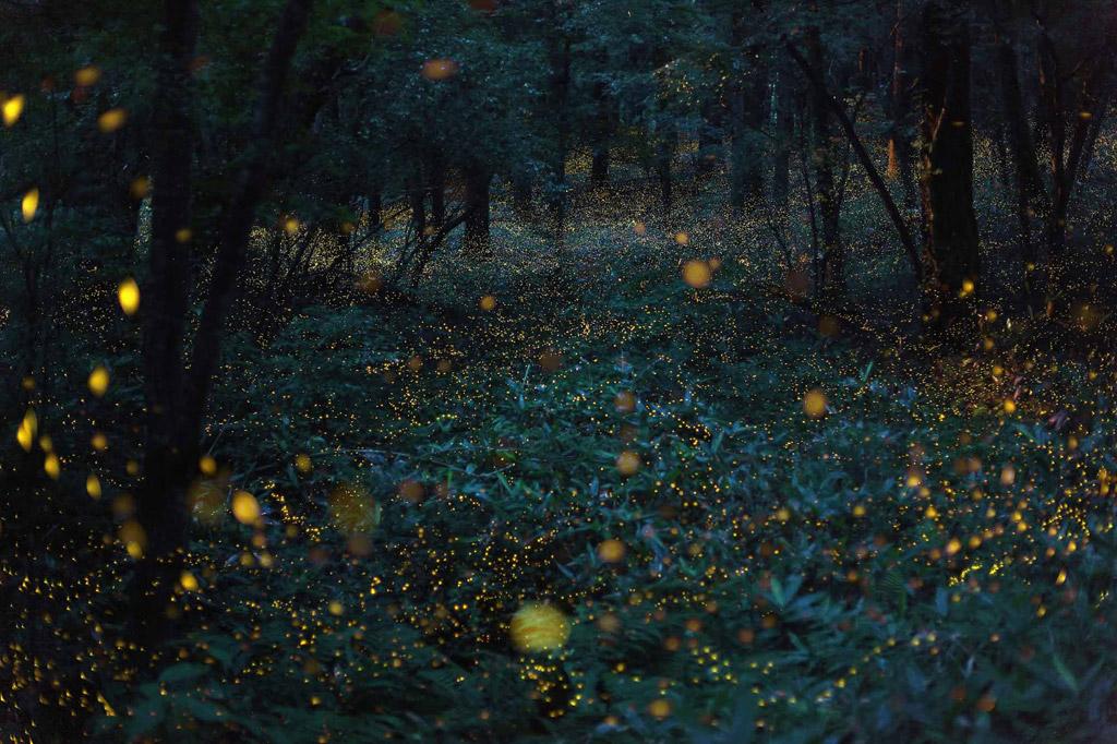Natural Light in Japan / Takehito Miyatake (6)