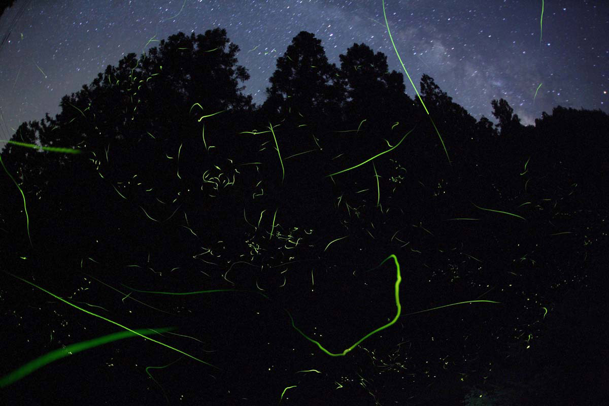 Natural Light in Japan / Takehito Miyatake (2)