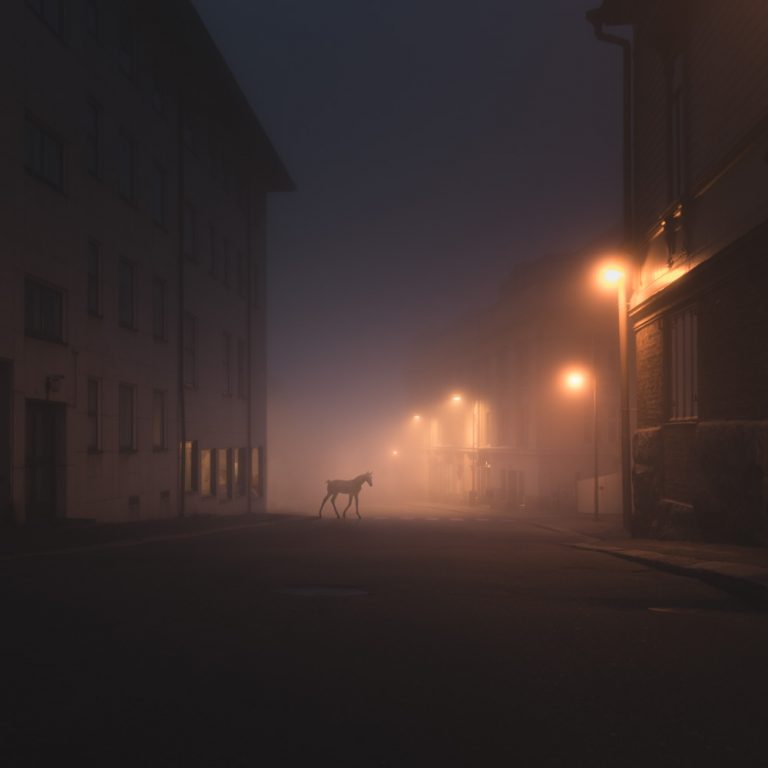 Night Annimals / Mikko Lagerstedt