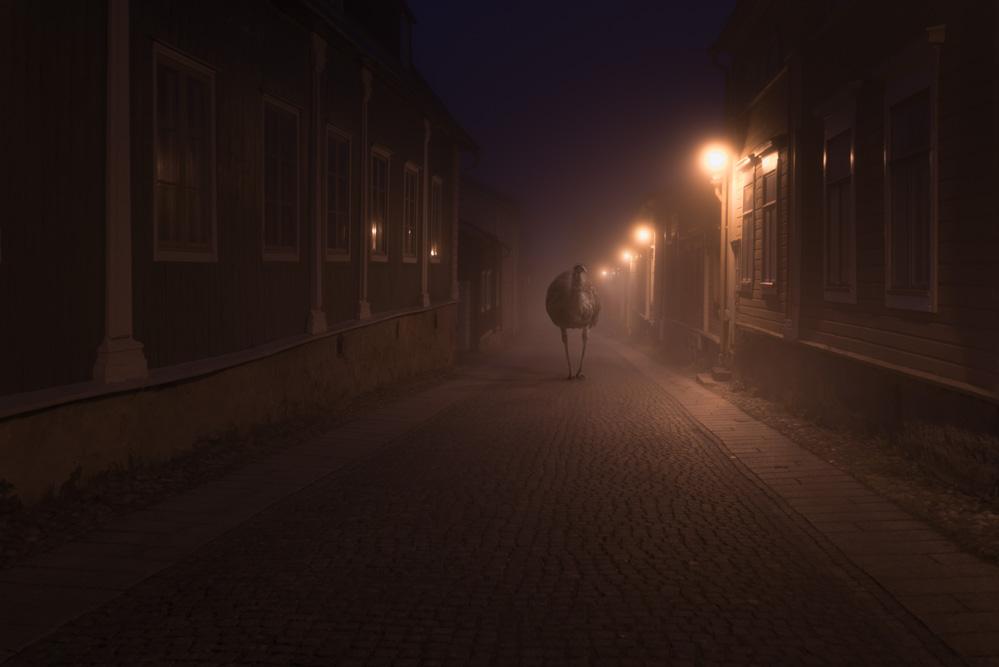 Night Annimals / Mikko Lagerstedt (2)