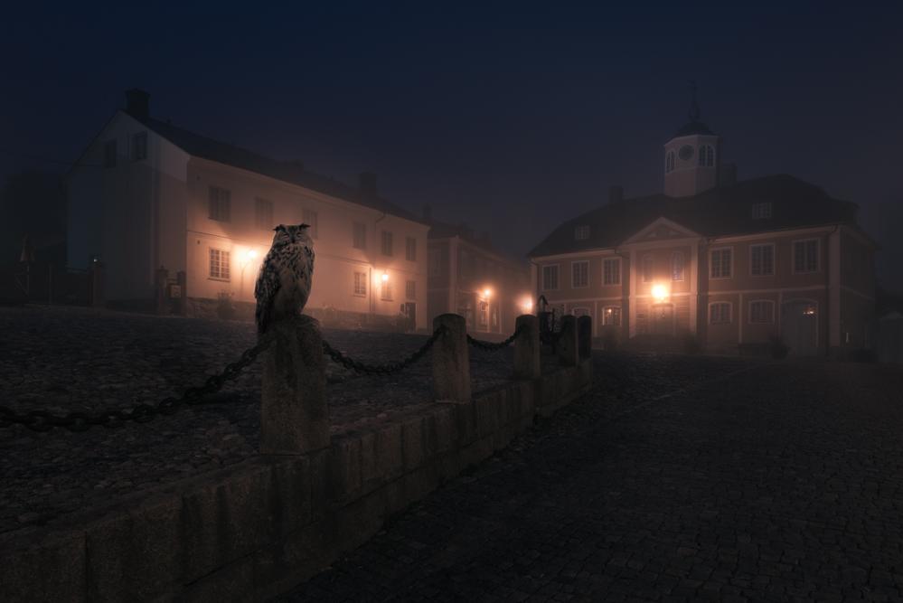 Night Annimals / Mikko Lagerstedt (1)