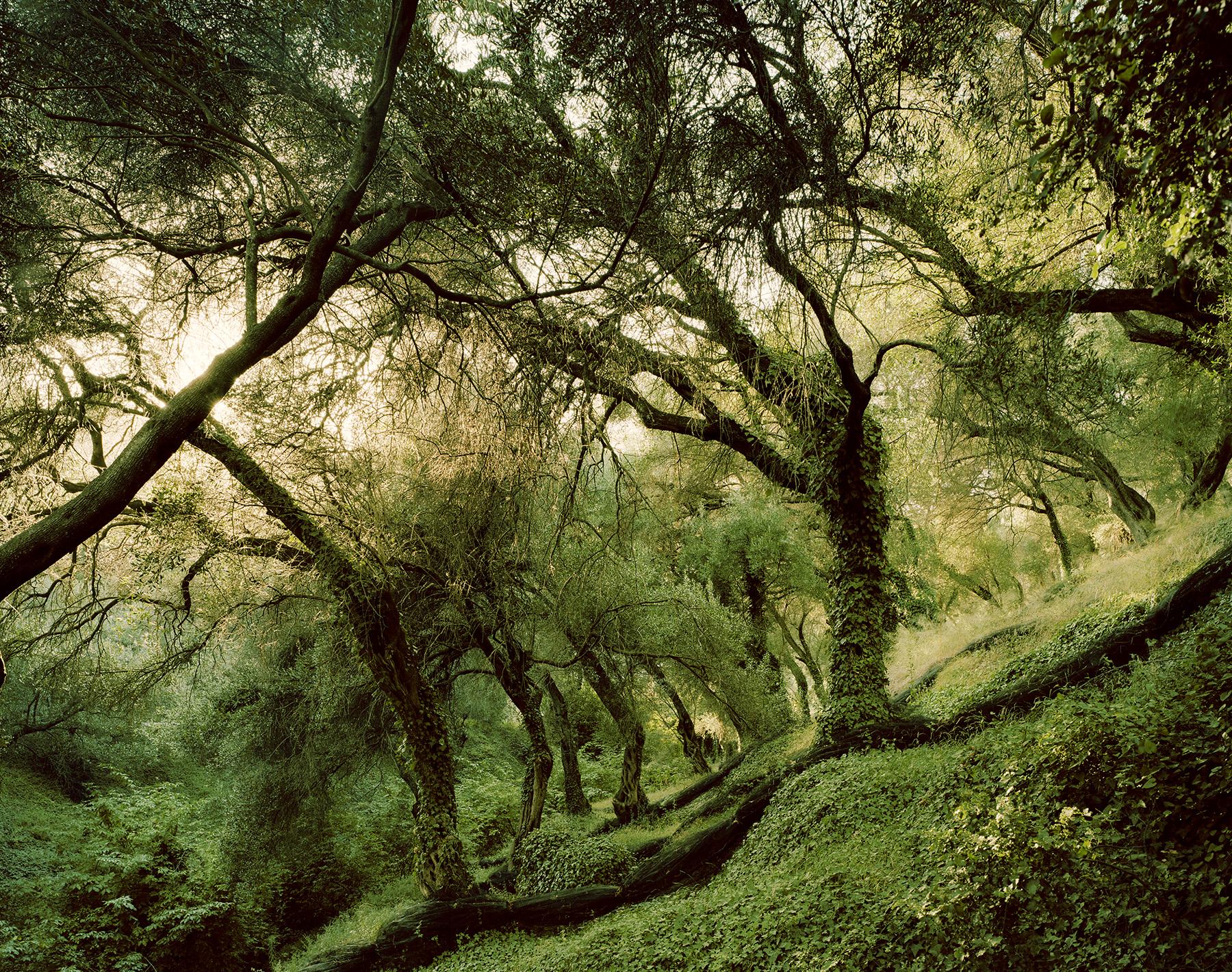 Landscape 5 / Felix Odell (10)