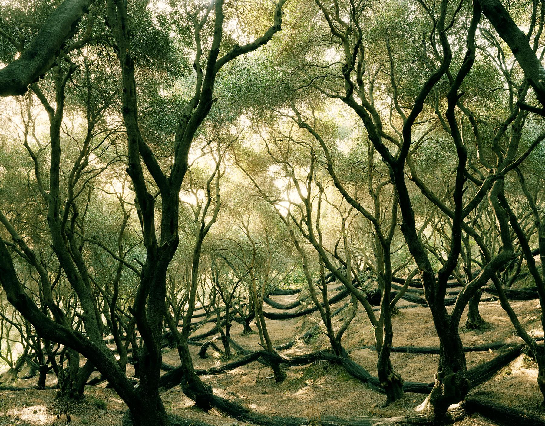 Landscape 5 / Felix Odell (9)