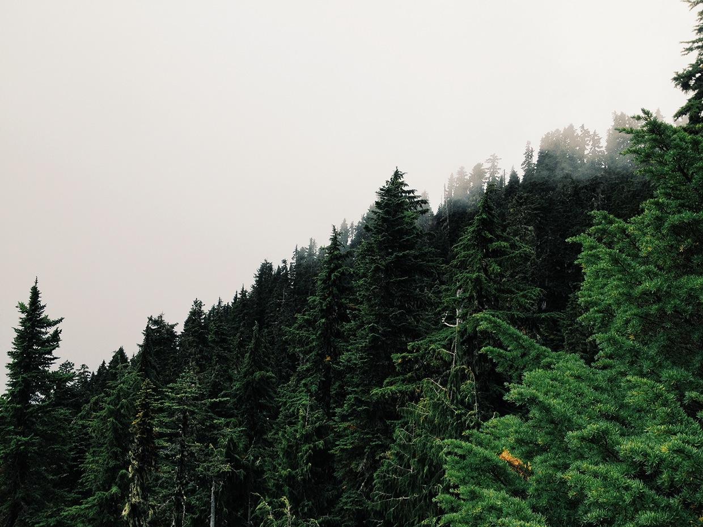 Project Fog / Joram Nathanael (16)