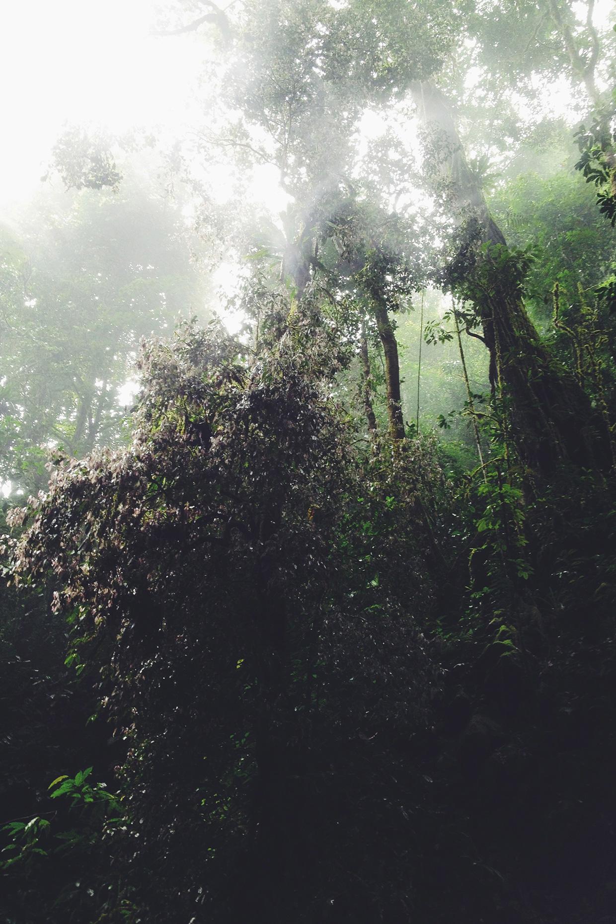 Project Fog / Joram Nathanael (2)