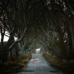 Roads Less Traveled / Andy Lee