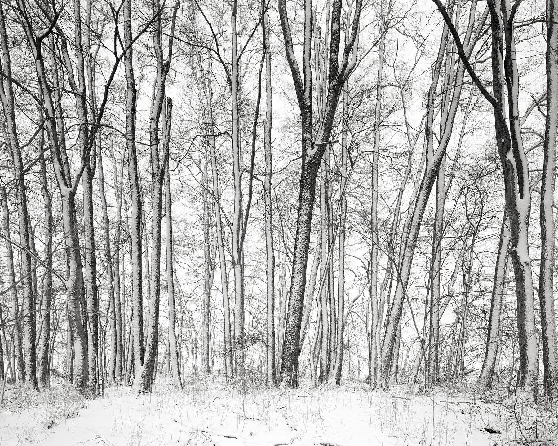 Landscape 5 / Felix Odell (5)