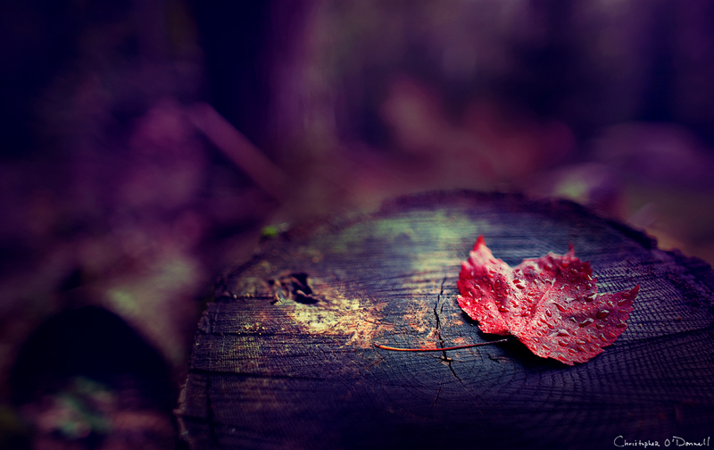 christopher_o'donnell_photographie_autumn_6