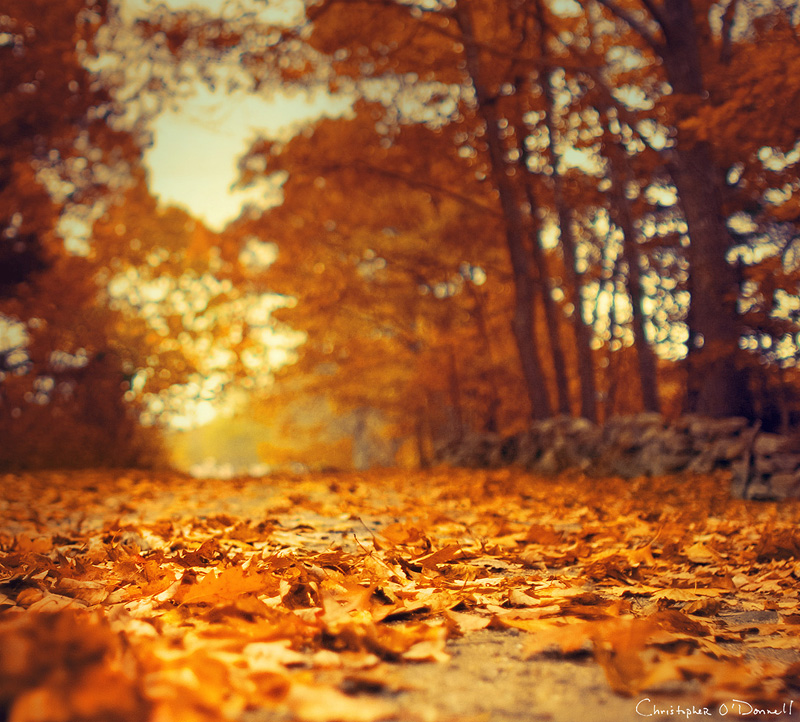 christopher_odonnell_photographie_autumn_7.jpg
