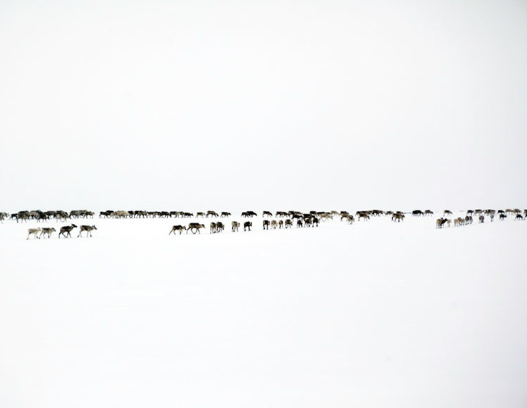 erika_larsen_sami_walking_with_reindeer_9.jpg