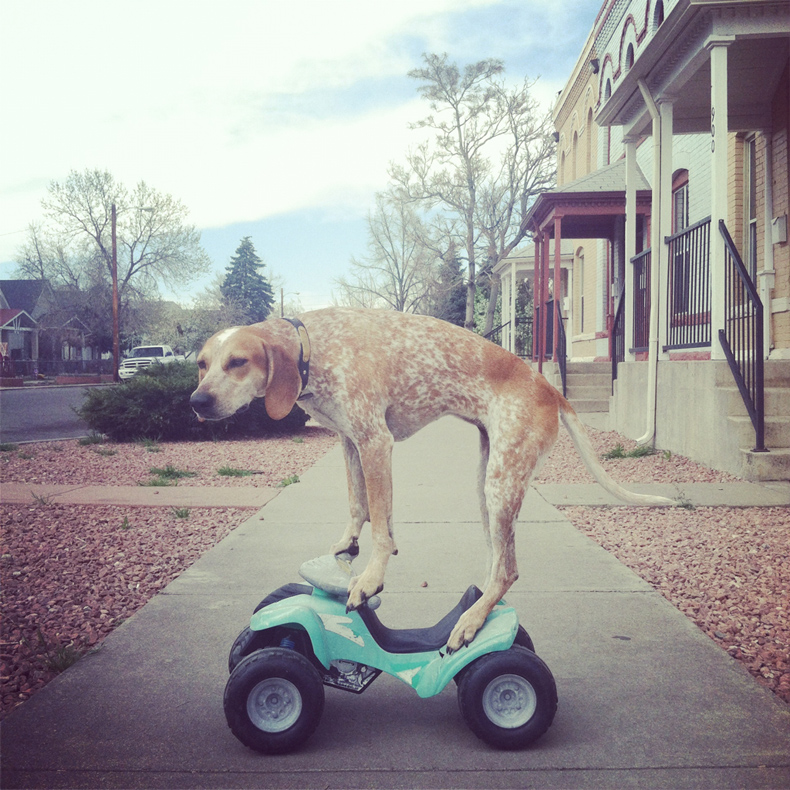 maddie_the_coonhound_theron_humphrey_15