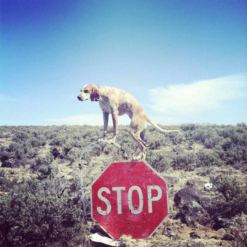 maddie_the_coonhound_theron_humphrey_16