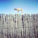 Maddie the Coonhound / Theron Humphrey