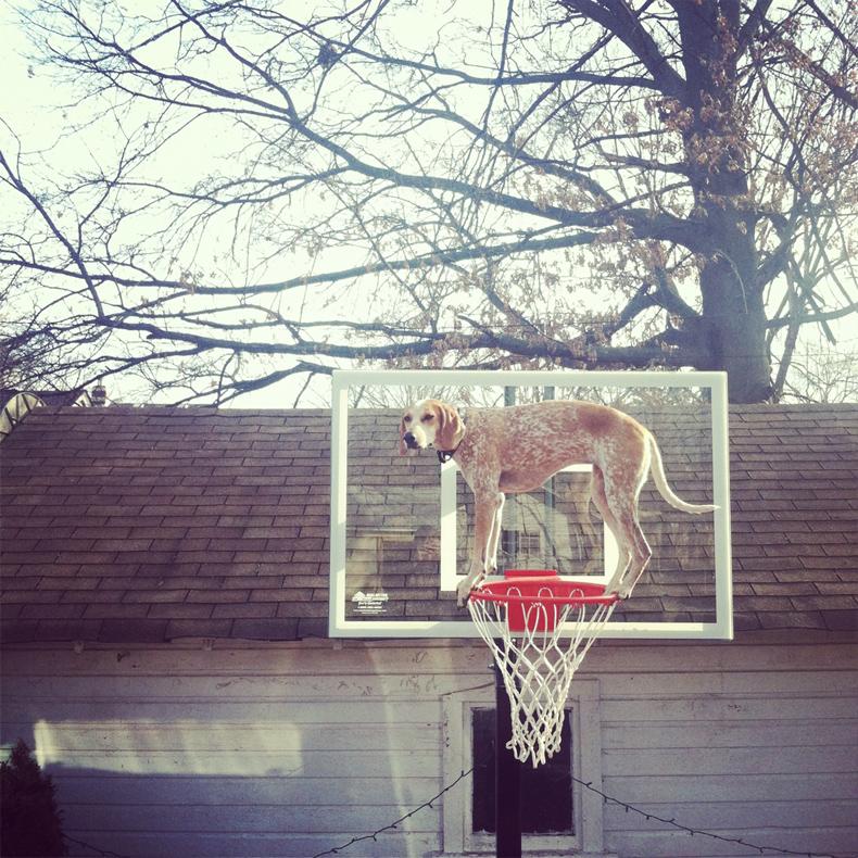 maddie_the_coonhound_theron_humphrey_23