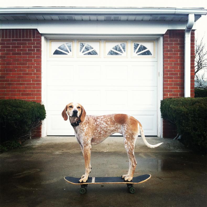 maddie_the_coonhound_theron_humphrey_24.jpg