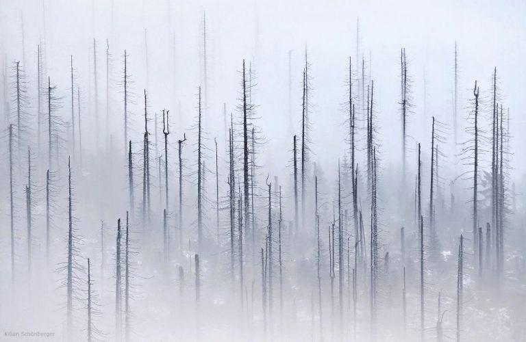 New Work / Kilian Schoenberger