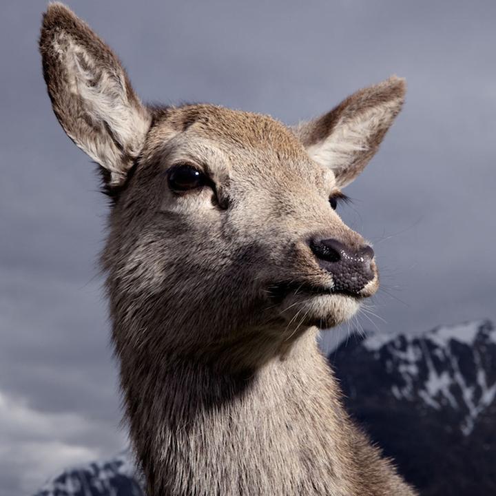 Noble Animals photographie