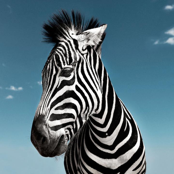 noble_animals_david_boni_7.jpg