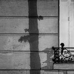 Paris Tree Shadows / Michael Wolf