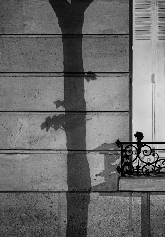 Paris Tree Shadows / Michael Wolf