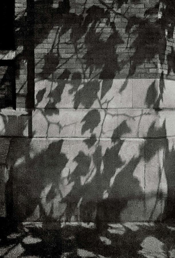 Paris Tree Shadows / Michael Wolf (1)