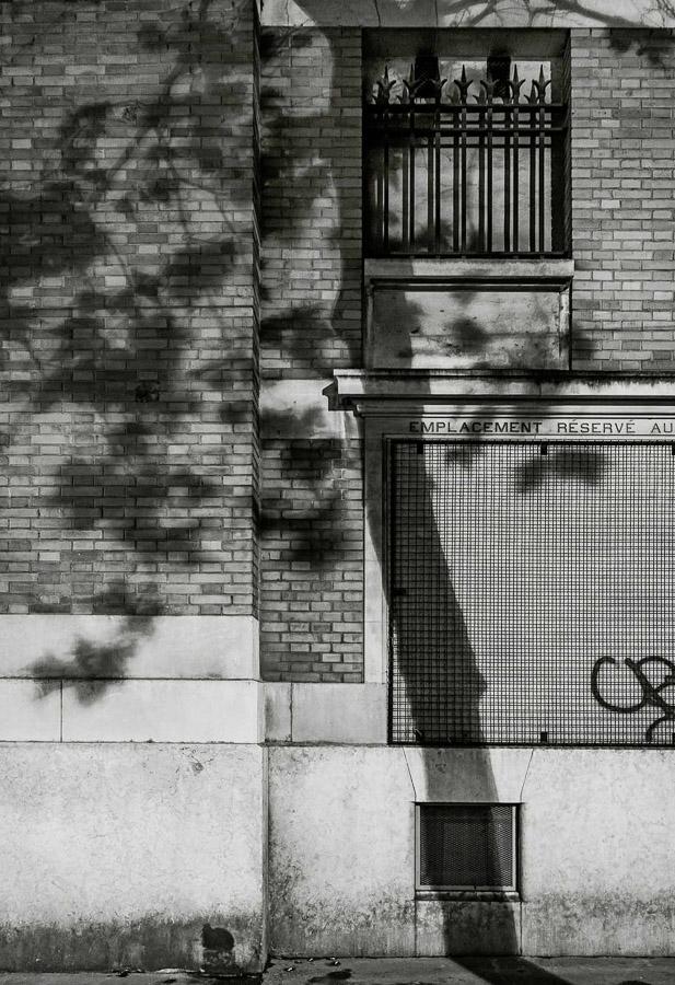 Paris Tree Shadows / Michael Wolf (8)