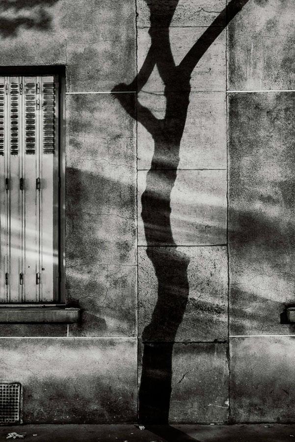 Paris Tree Shadows / Michael Wolf (7)