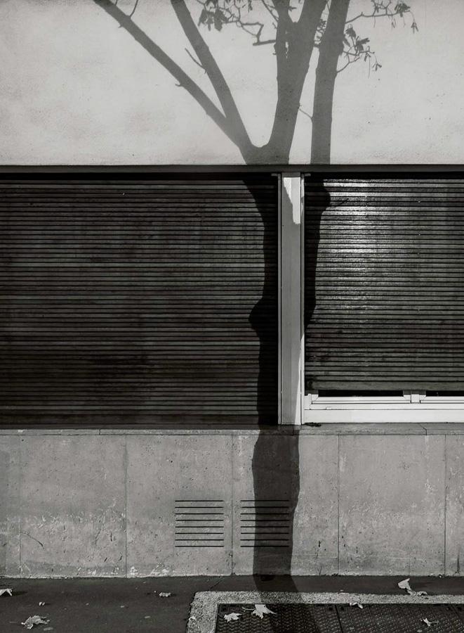 Paris Tree Shadows / Michael Wolf (5)