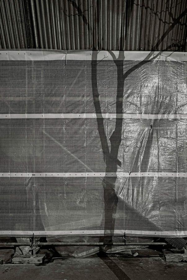 Paris Tree Shadows / Michael Wolf (4)