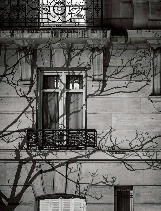 Paris Tree Shadows / Michael Wolf (3)