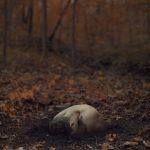 Surreal / Kyle Thompson