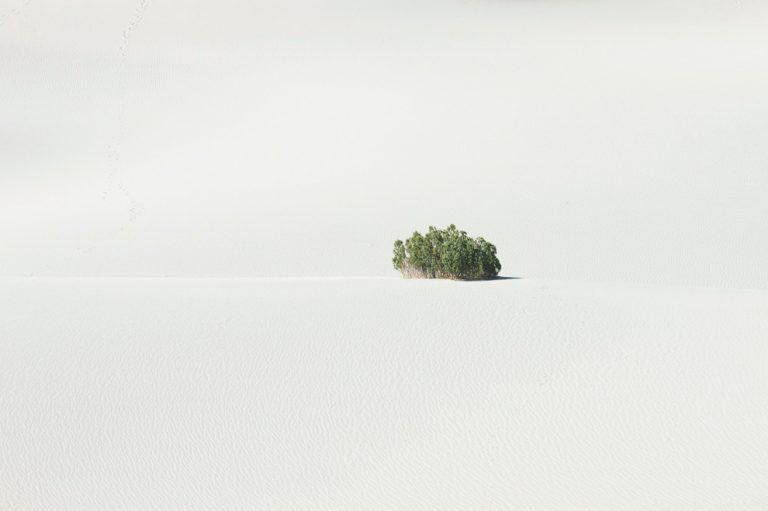 Landscape / Kate Rentz