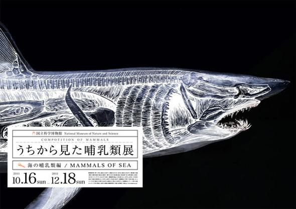 white_shark_2